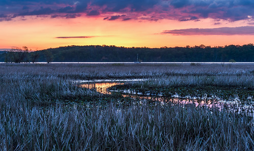 Morning on the Marsh by Geoff Livingston