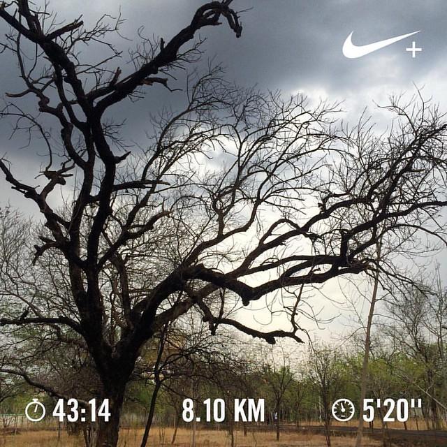 Bangalore Half Marathon 2016 training day #47. #nikeplus #nikerunning #werun2016 #werunkalaburagi #hmtraining #halfmarathontraining #nature #nofilter