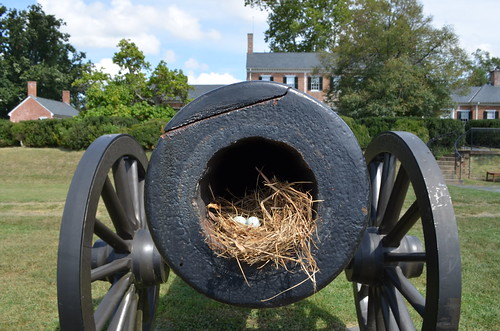 Robin's Nest and Eggs in a Cannon