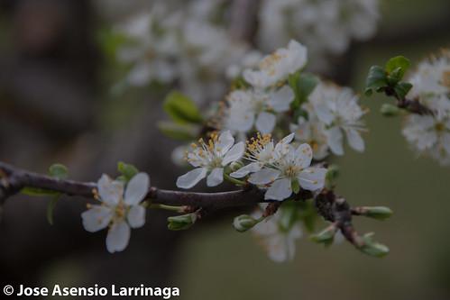 Primavera 2015 #DePaseoConLarri #Flickr -014