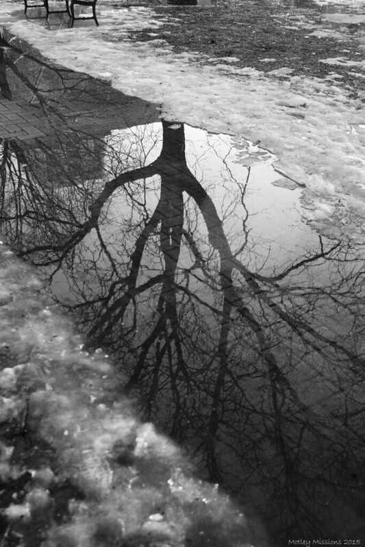 bw tree reflection