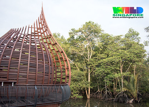 Sungei Buloh Wetland Reserve Extension boardwalk
