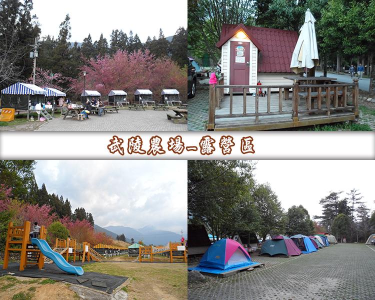 武陵農場露營區1