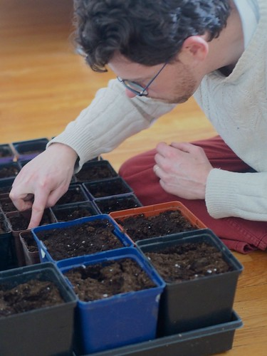 planting turnips