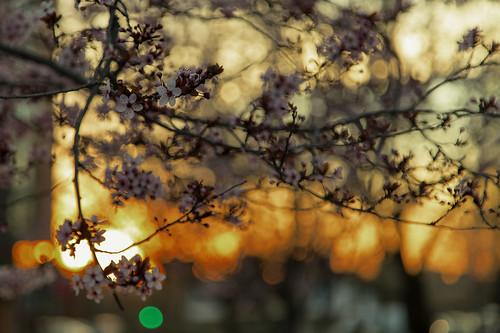 sunset color luz sol de flor almond puesta almendro
