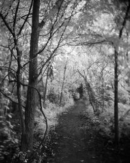 Winding Trail, Highbanks Metro Park