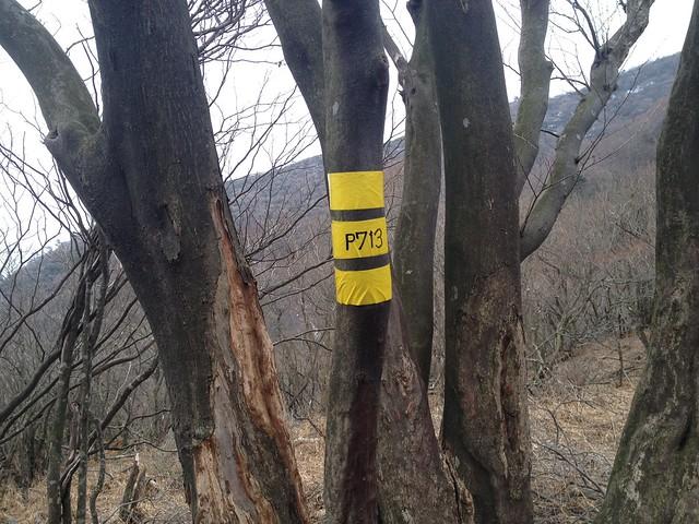入道ヶ岳 P713