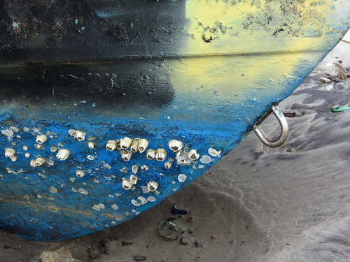 barnacles on abandoned boat