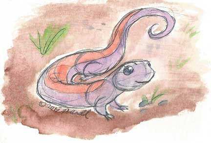 3.26.15 Salamandersona