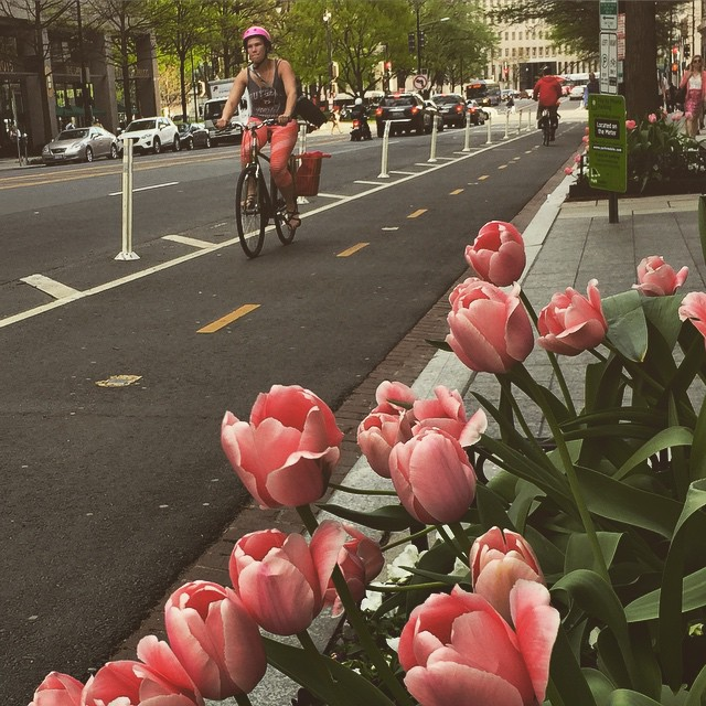 Biking by the tulips #bikedc #IGDC #spring #dc