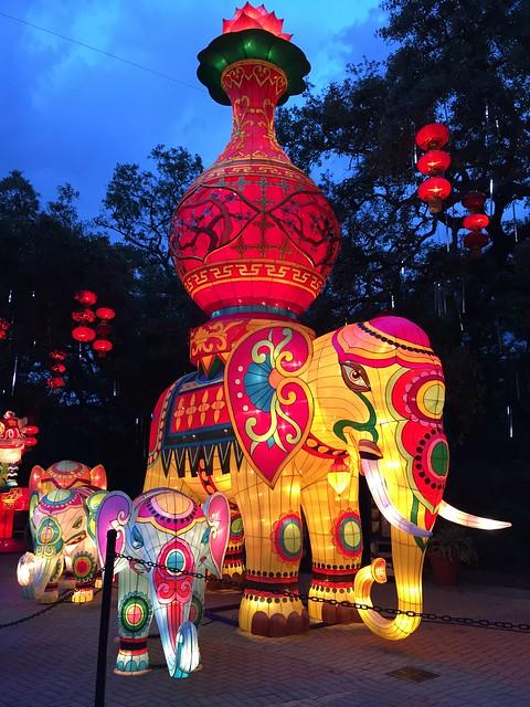 Zoominations Elephants