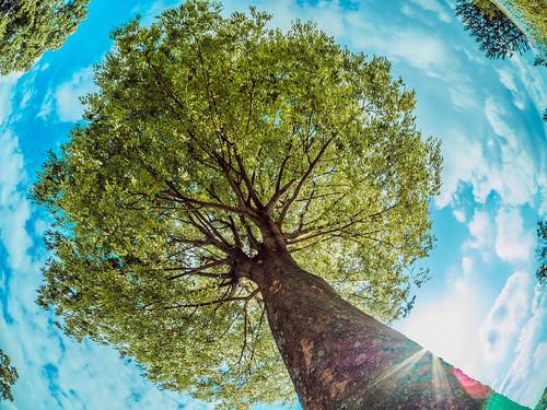 tree landscape scenery natural air hill jp 日本 木 grassland 自然 風景 kimura 景色 草原 樹 takuma 琢磨 a01 丘 木村 香川県 仲多度郡 photones