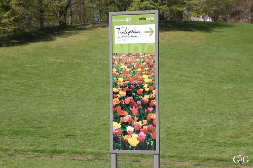 Tulipan im Britzer Garten 23.04.20151