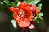 Pomegranate Flower with Matching Bug