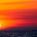Sunset Flight by Chexjc