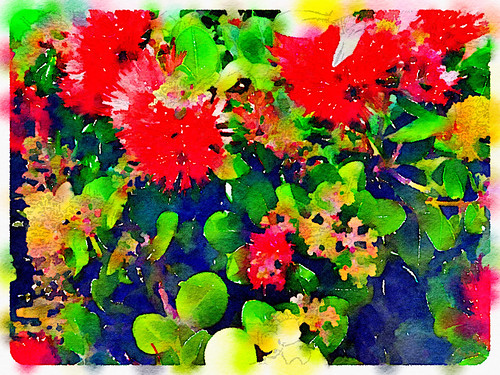 Bottle Brush Plant Edited in Waterlogue Photo App Using the 'Bold' Style