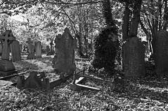 Graves (B&W)