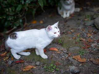 A Kitten I Called Leaf