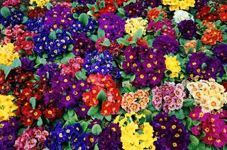 Flowers / 花