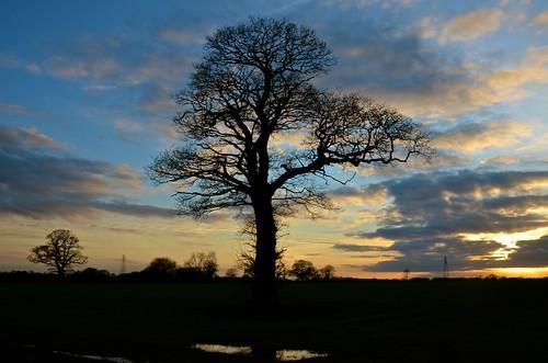 uk trees england nikon staffordshire midlands stafford 2015 haughton treesubject treesdiestandingup d7000
