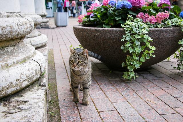 A kitty walking around the Hermitage Museum, Saint Petersburg, Russia サンクトペテルブルク、エルミタージュ美術館敷地内の子猫