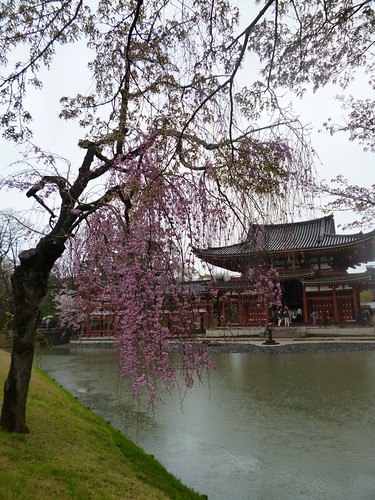 cherry blossom n phoenix hall