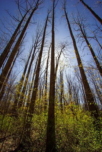 trees nature landscape spring hiking indiana mccormickscreekstatepark