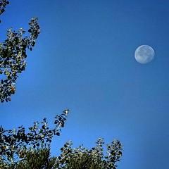 De día... #fullmoon #sortof #rx100mk3 #luna