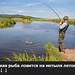 Какая рыба ловится на мотыля летом?