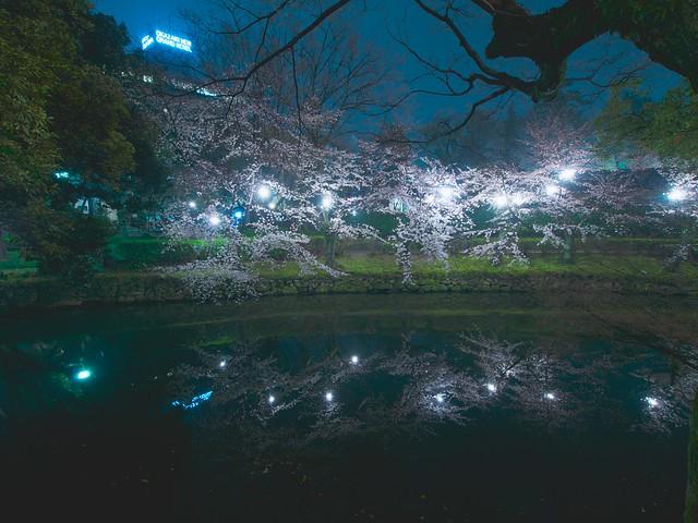 150329_OkazakiNightSakura 12