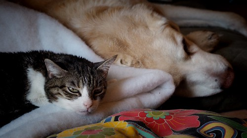 snooze buddies lucy and max