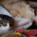 snooze  buddies lucy and max by Bill Beebe