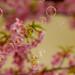 Bubbles & Blossoms by jcowboy