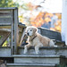 Pooch on Porch by photorectoby