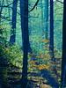 Suisse woodland