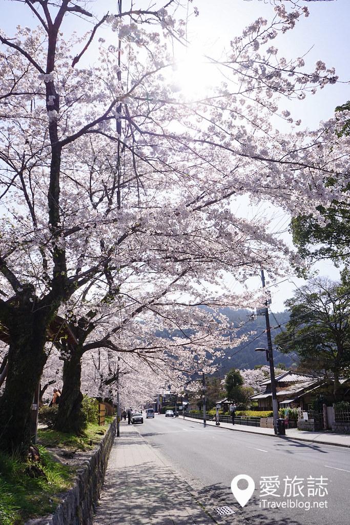 京都赏樱景点 哲学之道 21