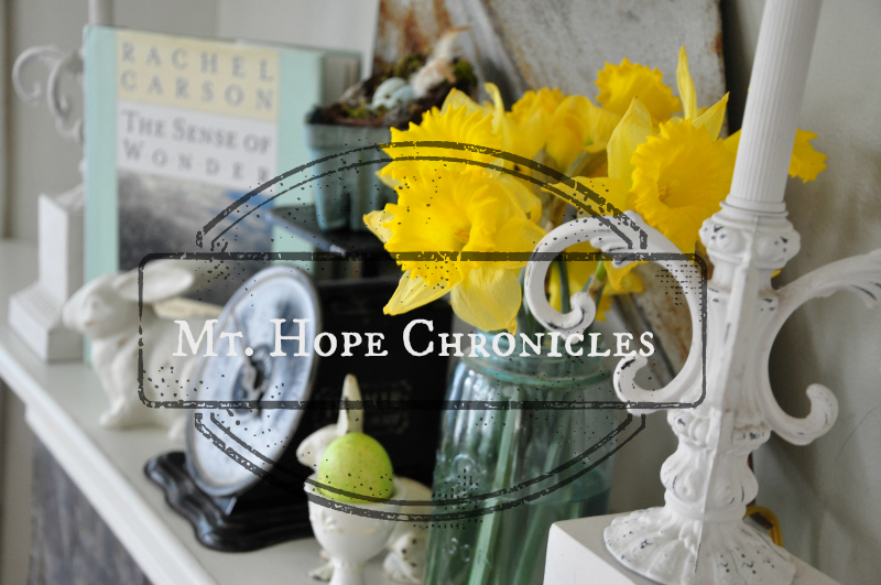 Spring @ Mt. Hope Chronicles