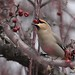 Bohemian Waxwing by Eric Hynes