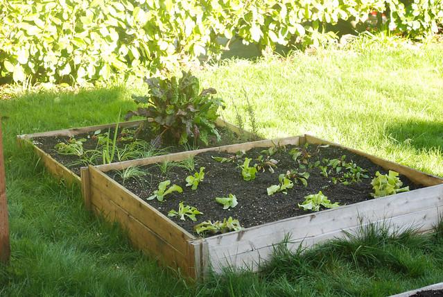 gardenbedplanted