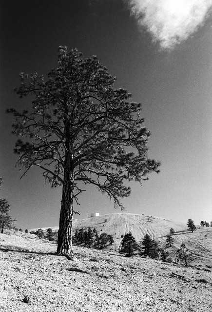 Tree And Hilltop