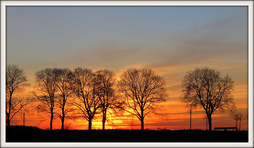 trees winter sunset germany landscape deutschland brandenburg rolfbrecherberlin