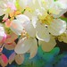 Blossom frenzy aka Light Fantastic by Feathering the Nest