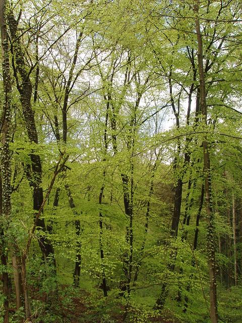 201205020563-beechwoods-spring