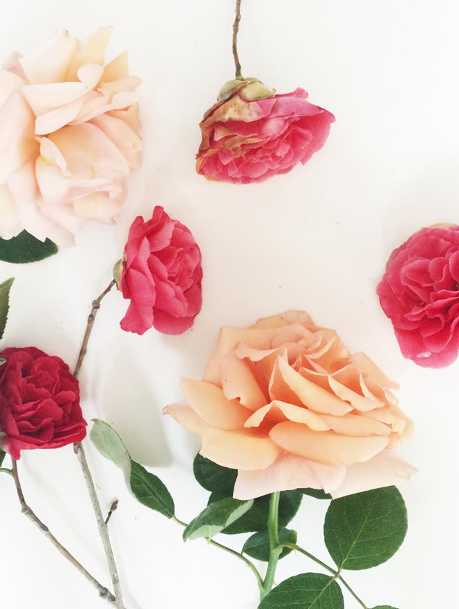 camellias and roses
