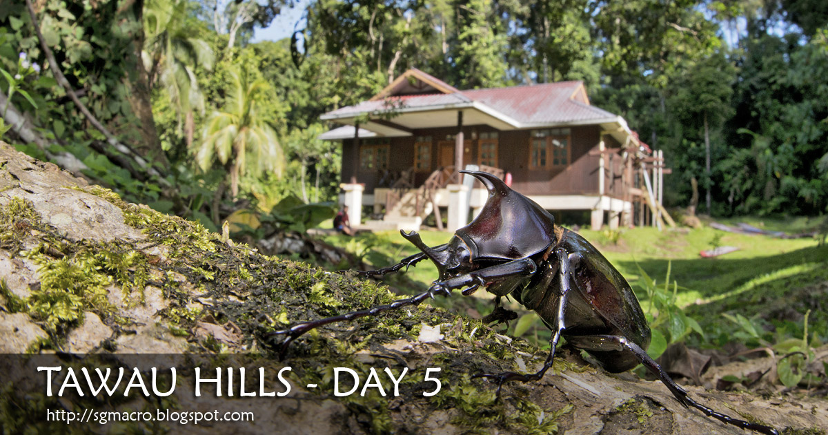 Tawau Hills - Day 5