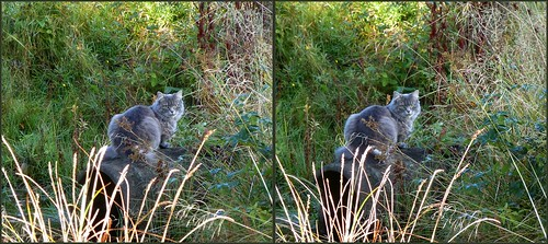 ... a cat ... 3D cross-view ...