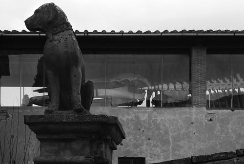 bw pisa museo toscana calci storia certosa naturale