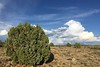 Juniper and Thunderhead