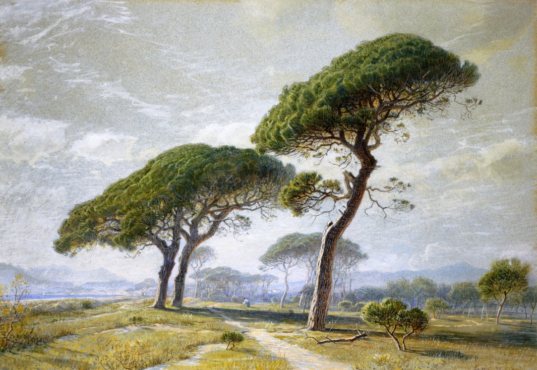 View of Cannes with Parasol Pines by William Stanley Haseltine, 1869