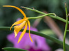 Peradeniya Botanical Gardens, Kandy